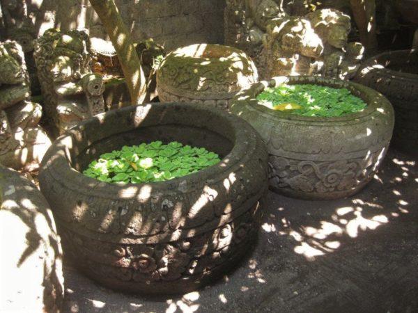 Plantas acuáticas en maceteros de piedra.