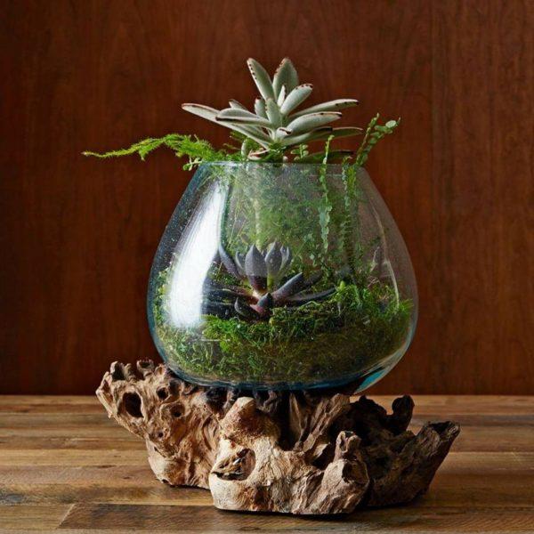Pecera de vidrio con plantas
