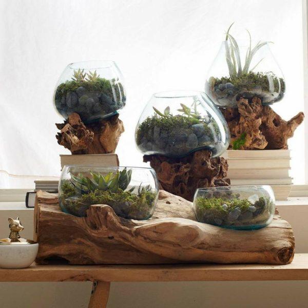 Peceras decorativas con plantas sobre raíces de madera de teca