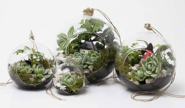 Peceras de vidrio con plantas